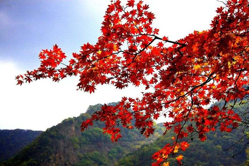 红枫河风景图片